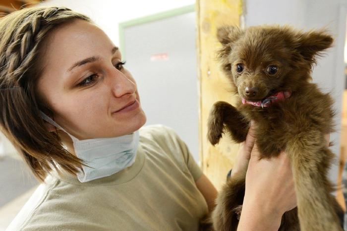 Vet holds puppy